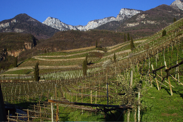 Vineyards of Alois Lageder near Lake Caldaro (Photo ©Tom Hyland)