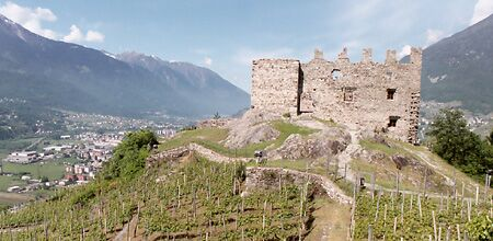 Vineyards at the Castello di Grumello, Valtellina (Photo ©Tom Hyland)