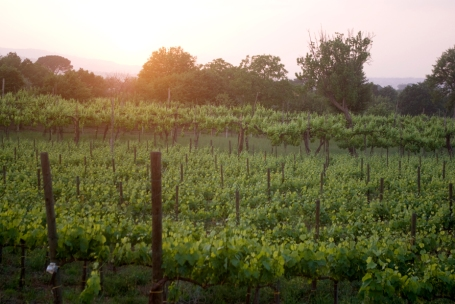 Sunset over vineyards in the Taurasi zone (Photo ©Tom Hyland)