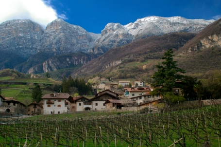 Vineyards near the town of Cortaccia, Alto Adige (Photo ©Tom Hyland)