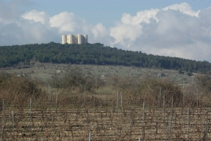 Uva di Troia vineyards near Castel del Monte (Photo ©Tom Hyland)