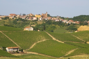 Barbera vineyards below the town of Castelnuovo Calcea, Asti (Photo ©Tom Hyland)