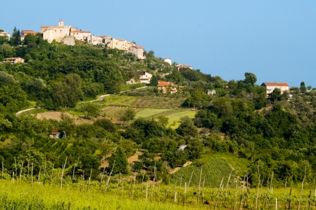 Greco vineyards below the town of Montemiletto, Campania (Photo ©Tom Hyland)