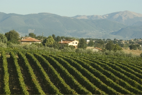 Sagrantino vineyards near Montefalco (Photo ©Tom Hyland)