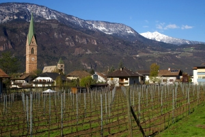 Vineyards in Alto Adige (Photo ©Tom Hyland)