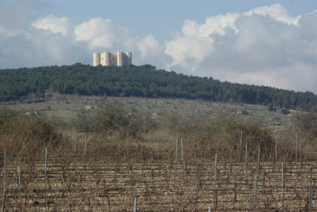 Vineyards below Castel del Monte (Photo© Tom Hyland)