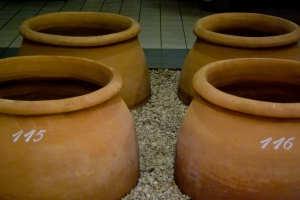 Terra Cotta pots (amphorae), COS (Photo ©Tom Hyland)