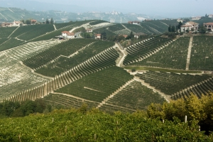 Falletto Vineyard of Bruno GIacosa, Serralunga d'Alba (Photo ©Tom Hyland)