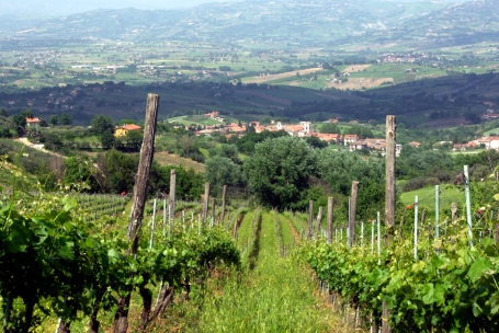 Greco vineyard of Mastroberardino (Photo ©Tom Hyland)
